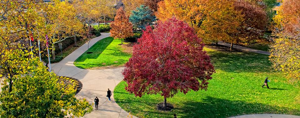 Campus Treetops